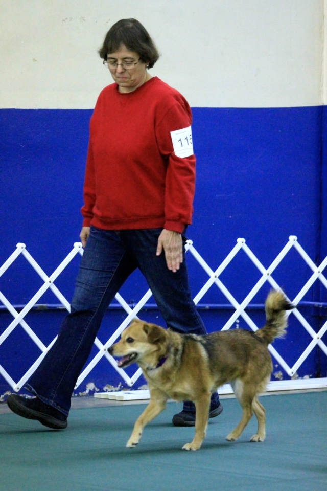 Sable mixed breed dog walks briskly in heel position next to small woman wearing jeans and red sweatshirt