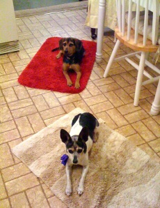 Cricket and Zani on mats in the kitchen. Good stuff tends to happen there!