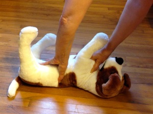 A brown and white stuffed dog iw being held forcefully on her back. You can see a woman's arms coming down and her hands are on the dog's belly and the underside of her neck, pushing hard.