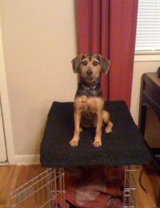 Zani can sit on a crate