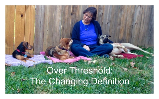 Eileen and three dogs threshold2